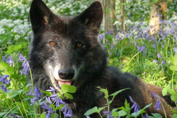 Winston head on woodland setting
