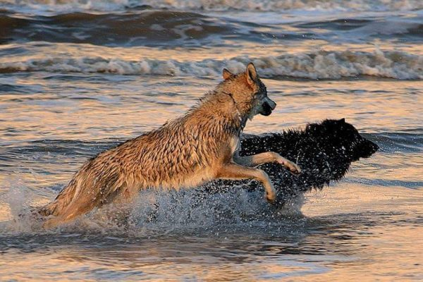 Missi-and-Winston-playing-in-the-surf