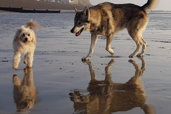 watermill-wolves-on-the-beach-fun
