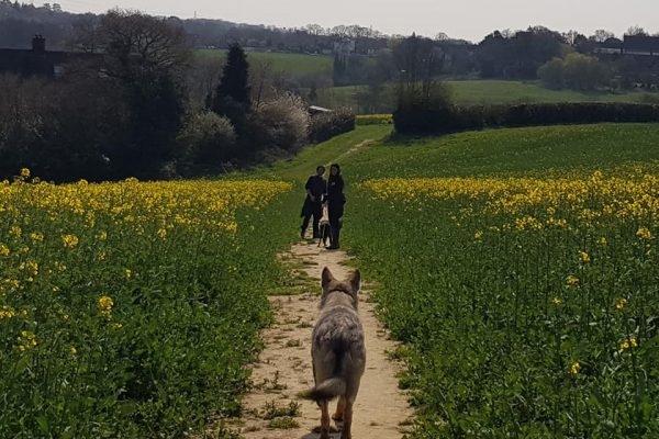 watermill-wolves-walking