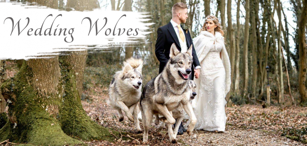 wedding-wolves-banner