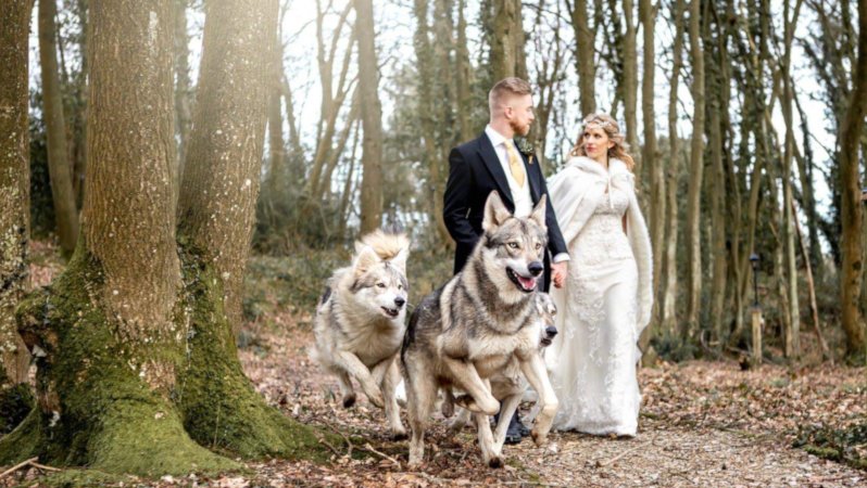 Wedding Wolves in the Woods